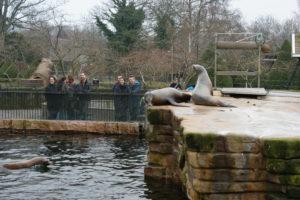 ideer til mandelgave - tur i zoo